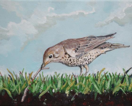 Vogel op het gras